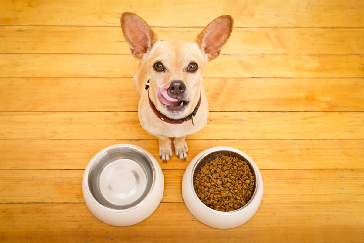 dog with two bowls of food