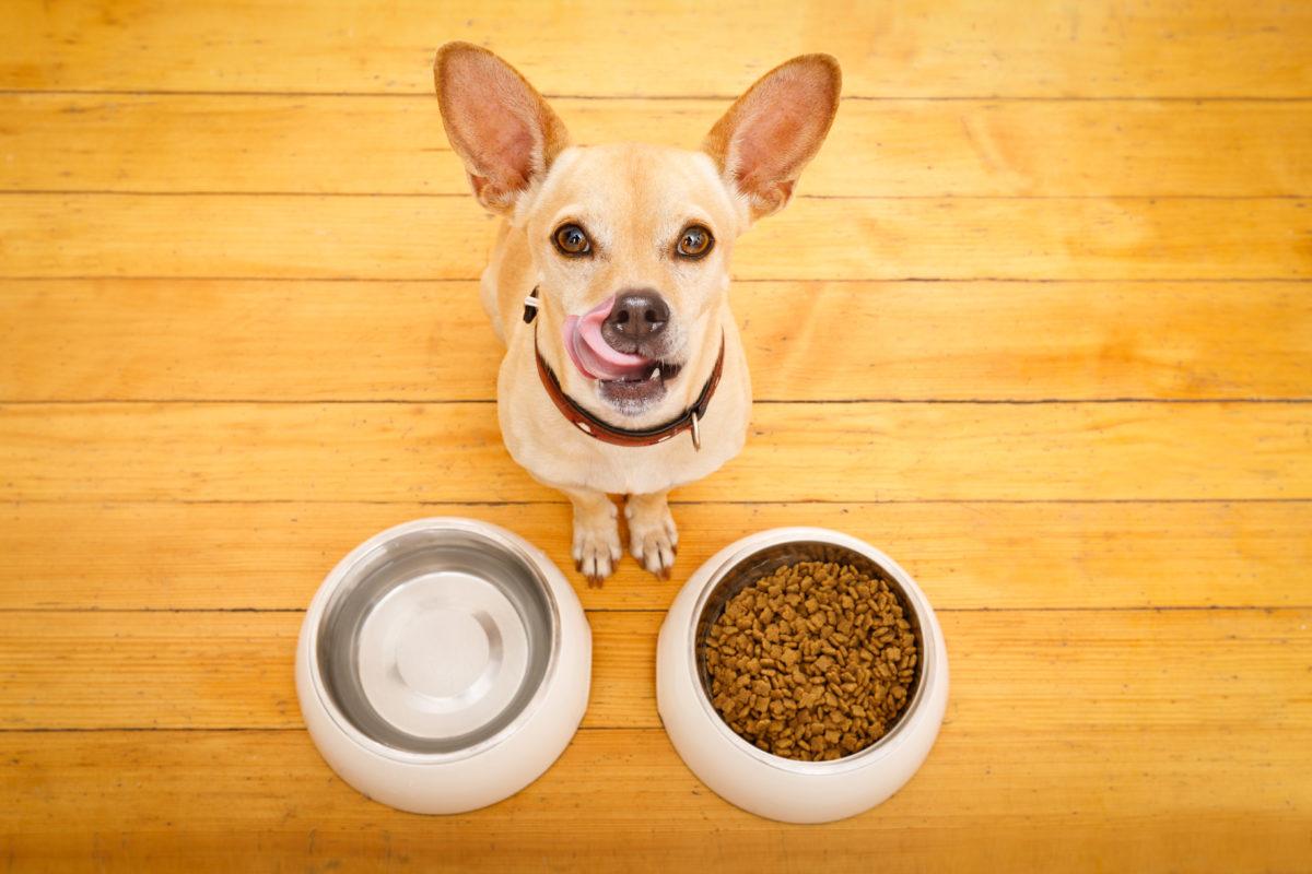 gos amb dos bols de menjar