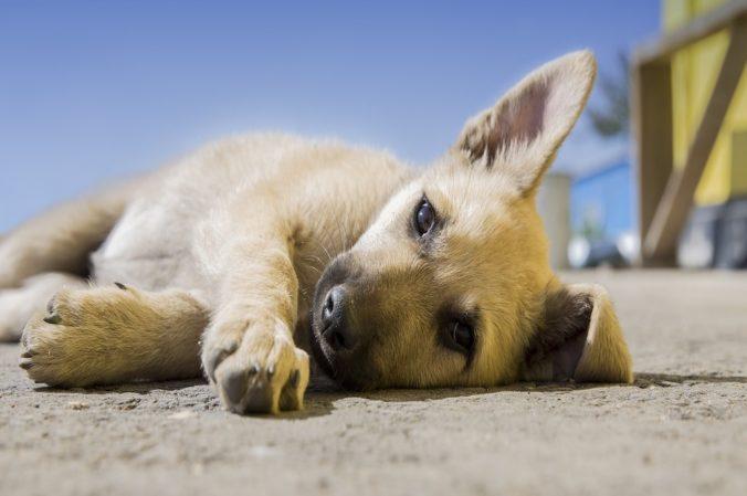cachorro de perro tumbado