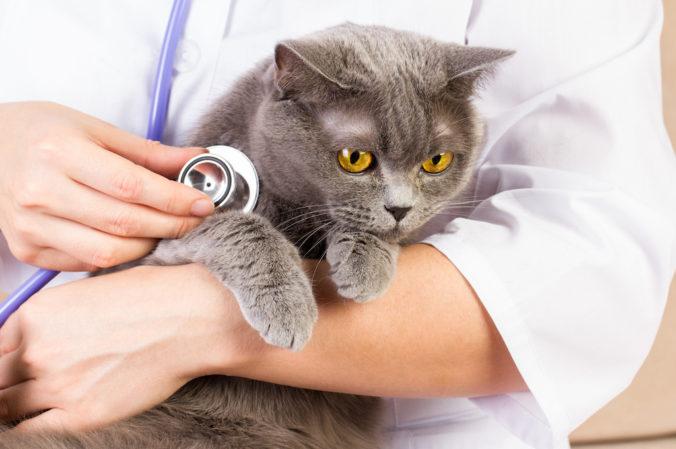 gato sostenido por veterinario