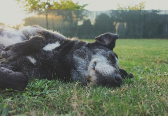 perro negro tumbado sobre el césped