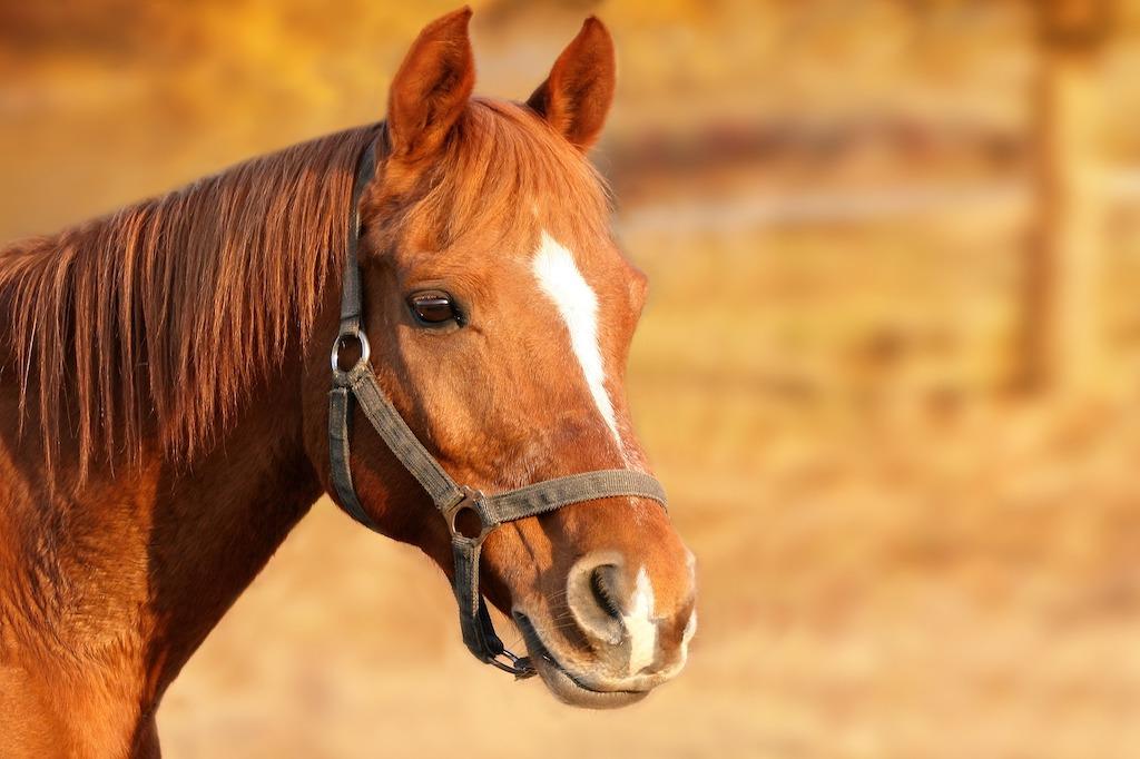 Fotografia d'un cavall marró en un prat