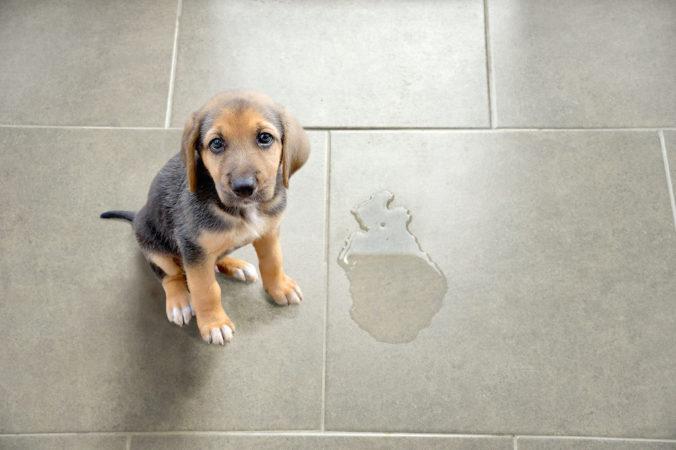 cachorro de perro que ha hecho pis
