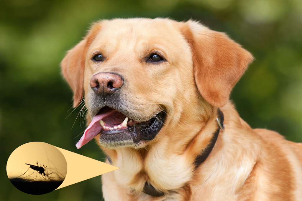 brown dog with an image of a fly