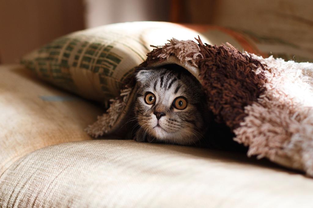 gato escondido debajo de una manta