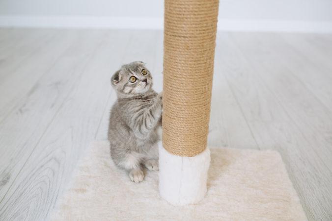 little gray cat scratching a scraper