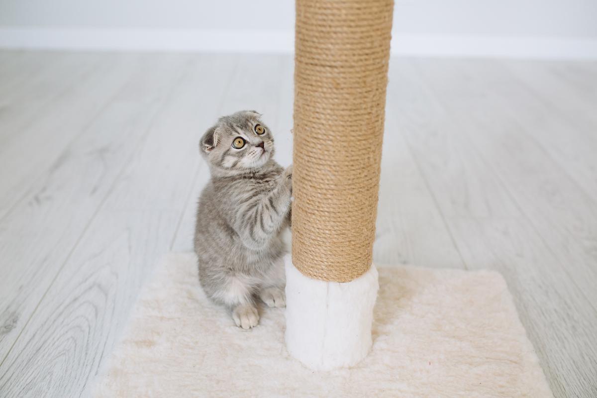 pequeño gato gris arañando un rascador