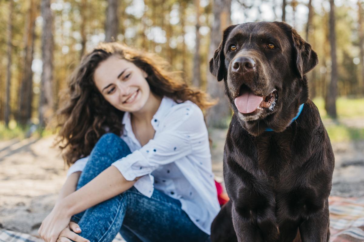 perro grande marrón en el bosque junto a una chica