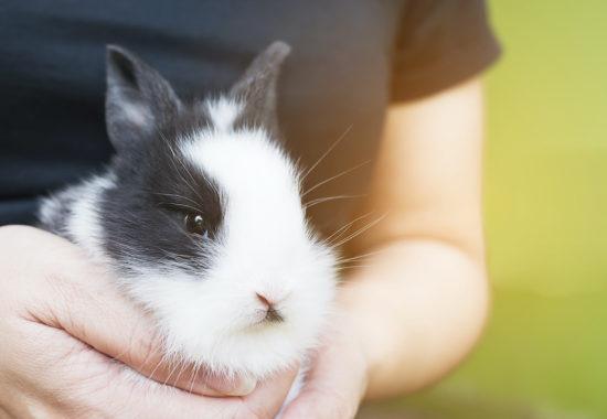conill Thai blanc i negre en braços