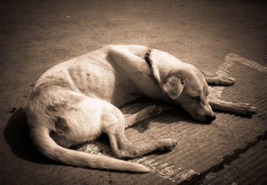 perro delgado tumbado en el suelo