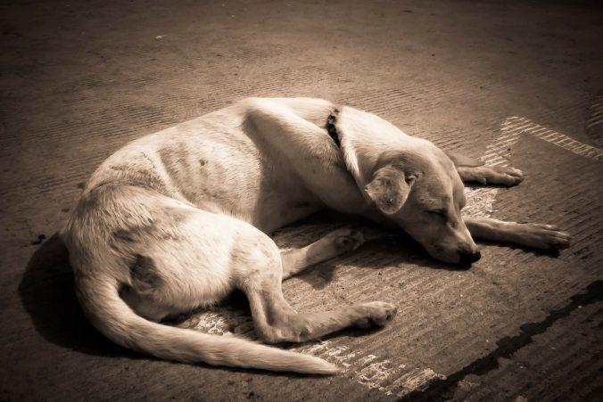 thin dog lying on the floor