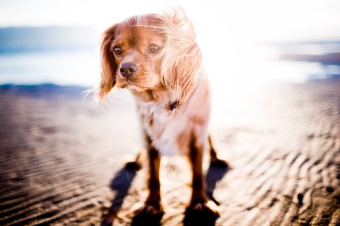 dog in the sand on the beach under a strong sun