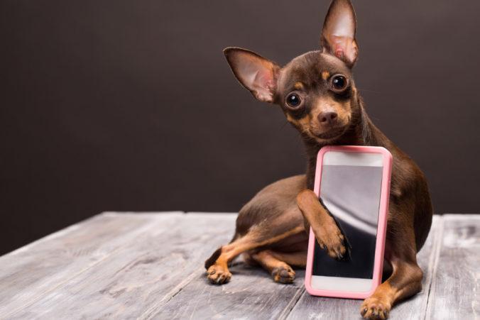 App mascotas