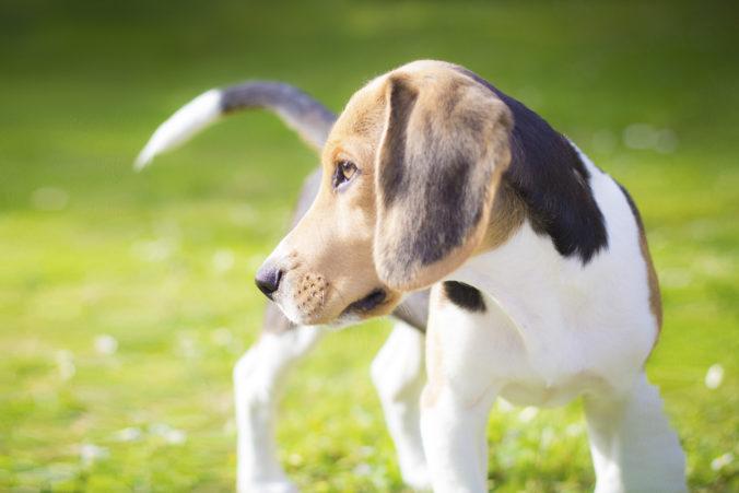 perro persiguiendo cola