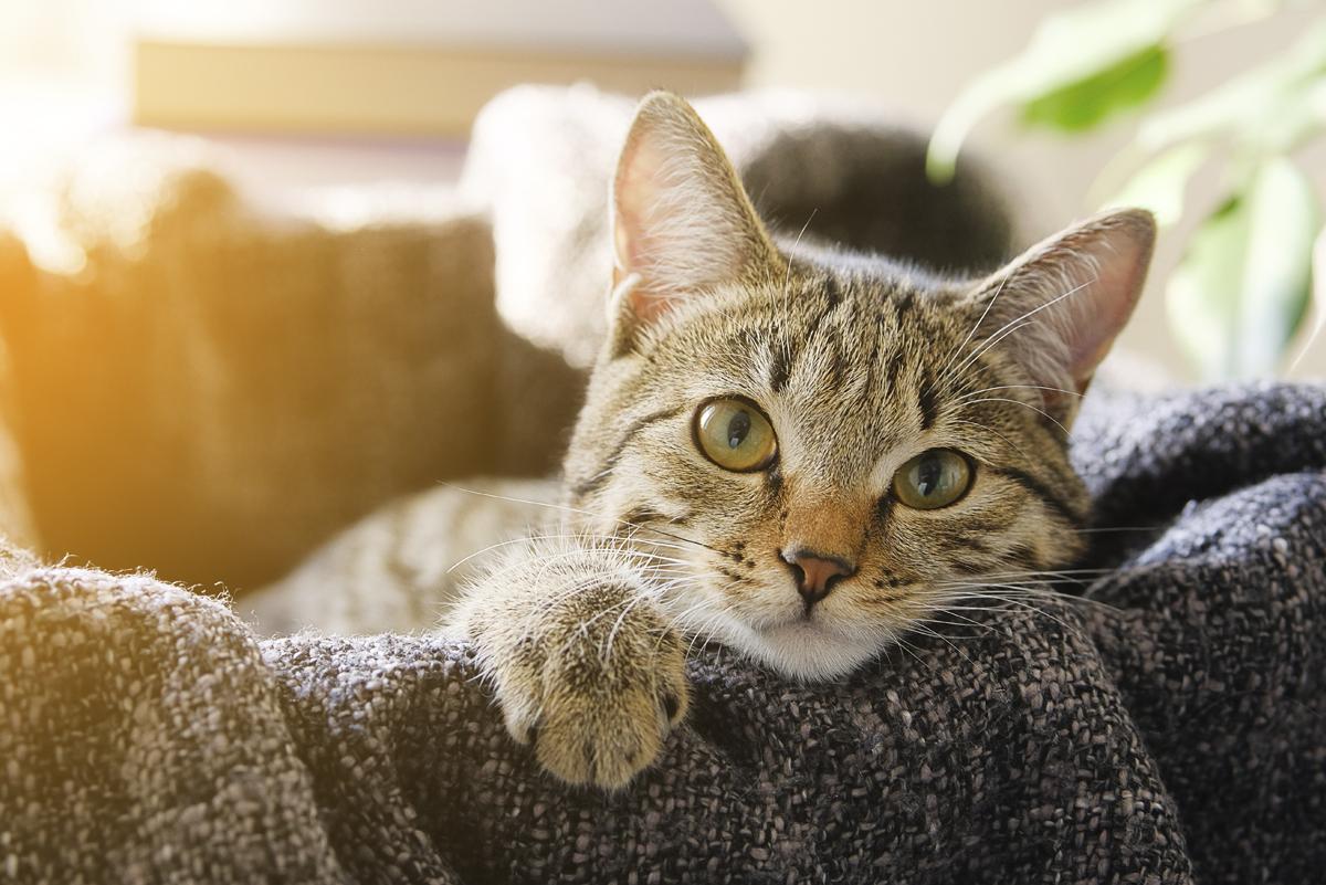 cat in his bed