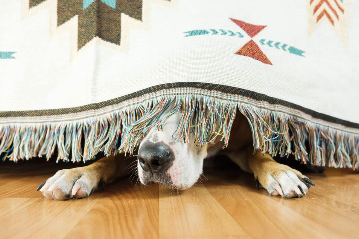 Perro escondido debajo del sofá con miedo