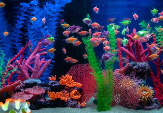 Fish tank with multicolored fish swimming