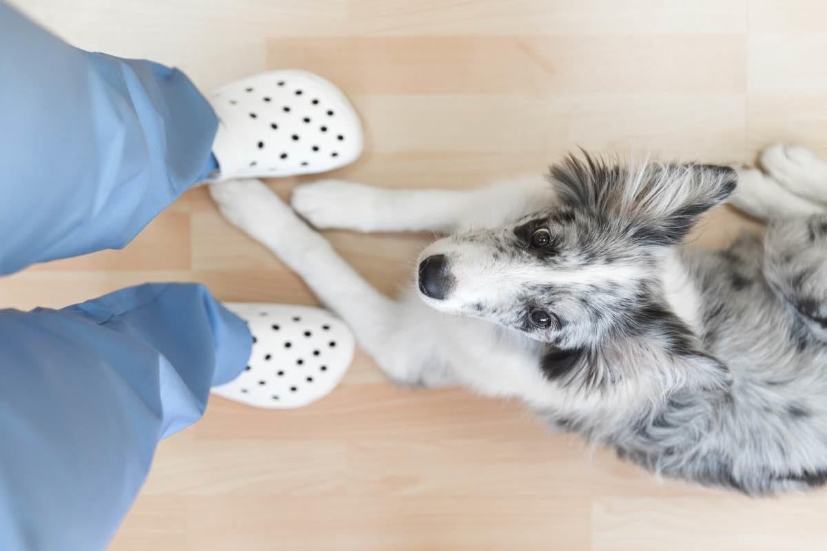 Perro tumbado a los pies de un veterinario