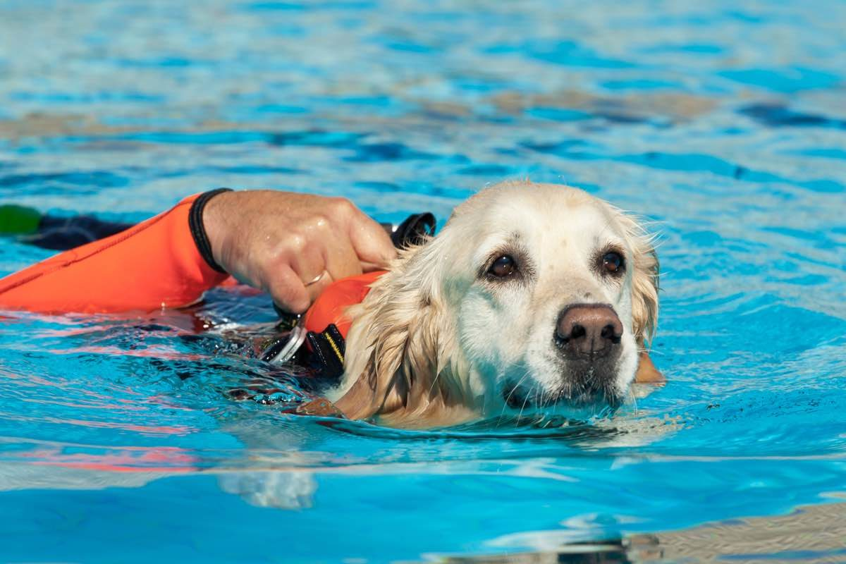 Dog with life jacket swimming in a pool