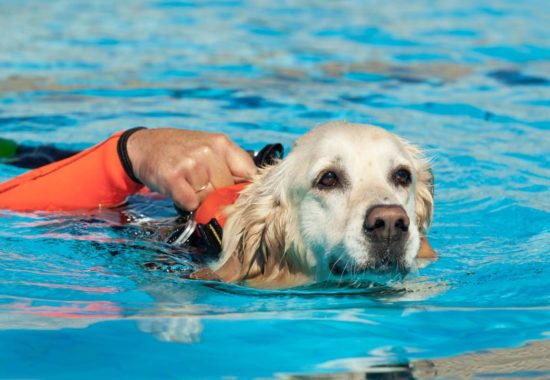 Perro con chaleco salvavidas nadando en una piscina