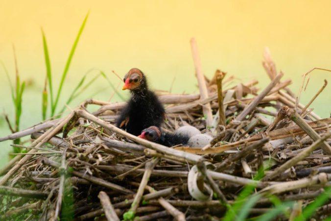 Baby bird in a nest