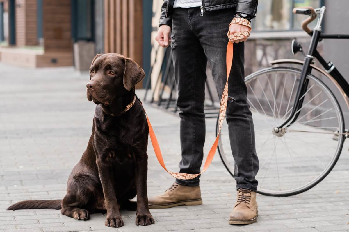 Dog on a leash sitting on the street next to his owner.