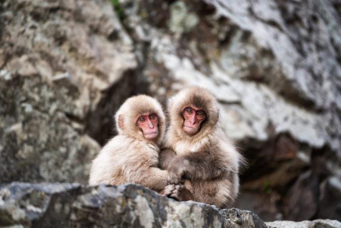 Dos monos pequeños juntando sus manos y mirando al frente
