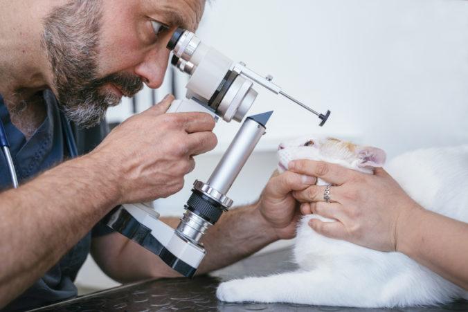 Veterinario realizando un examen ocular a un gato