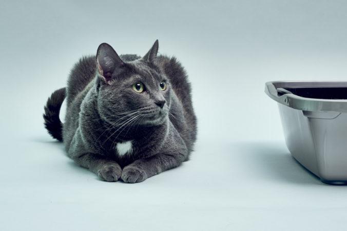 Gato de color gris oscuro tumbado junto a su arenero