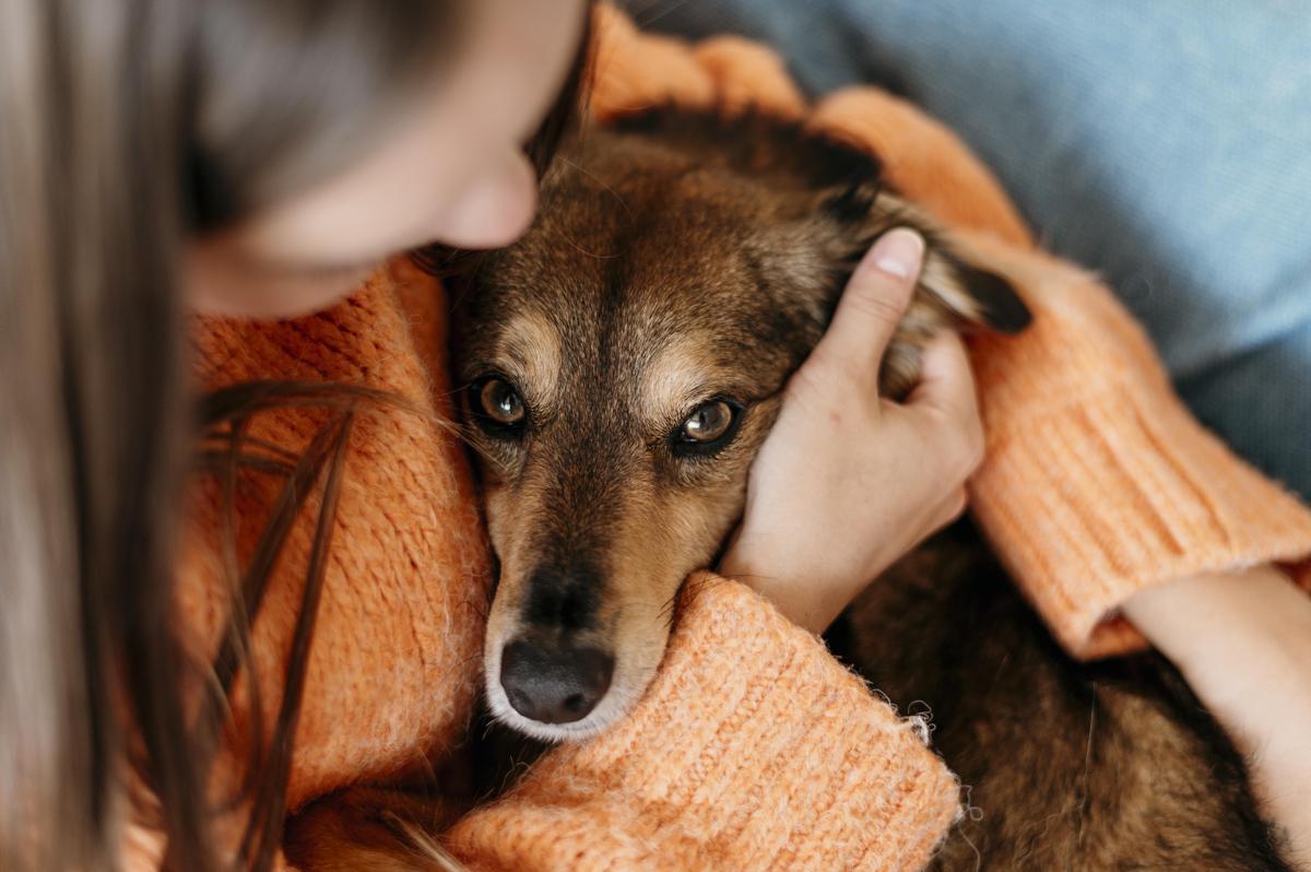 Gos abraçat per una dona.