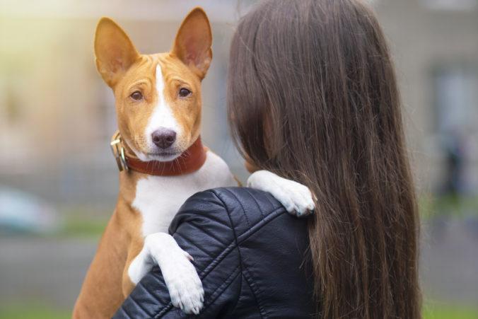Perro de raza basenji en brazos de una chica.