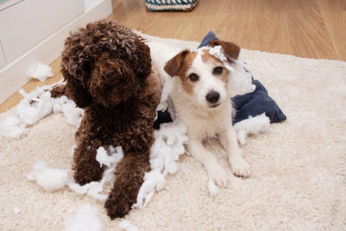 Dos perros han destrozado un cojín al quedarse solos en casa