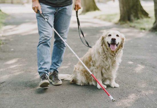 Perro de asistencia con un hombre ciego