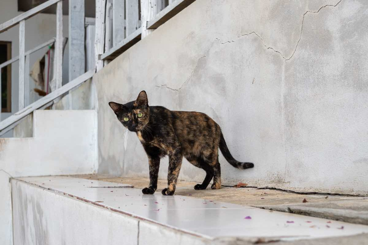 Tortoiseshell cat stand on concrete floor with tile at old house