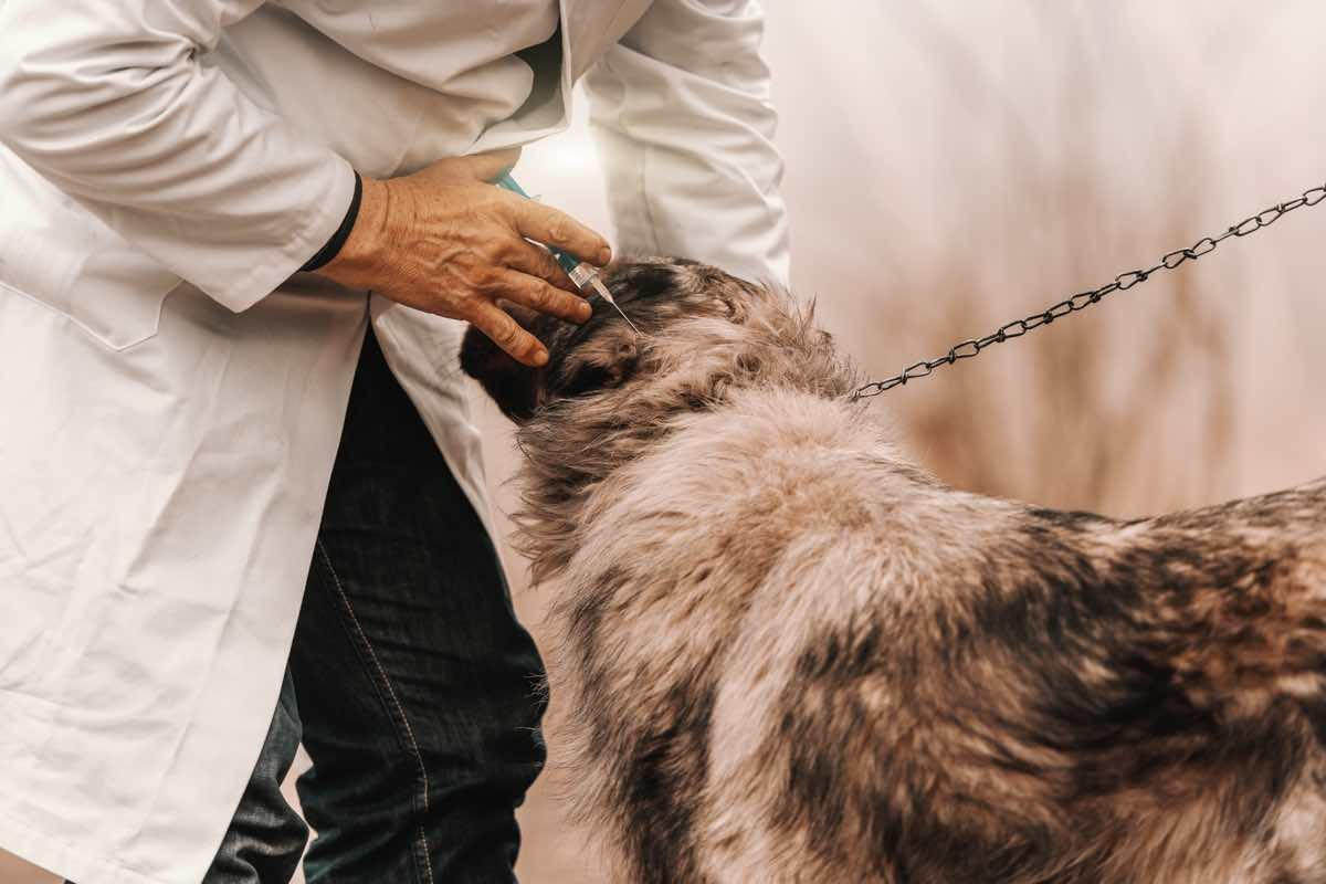 Close up of veterinarian in white coat giving vaccine to dog.